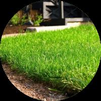 Газонные травы в г.Юрга