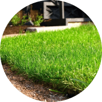 Газонные травы в г.Александров